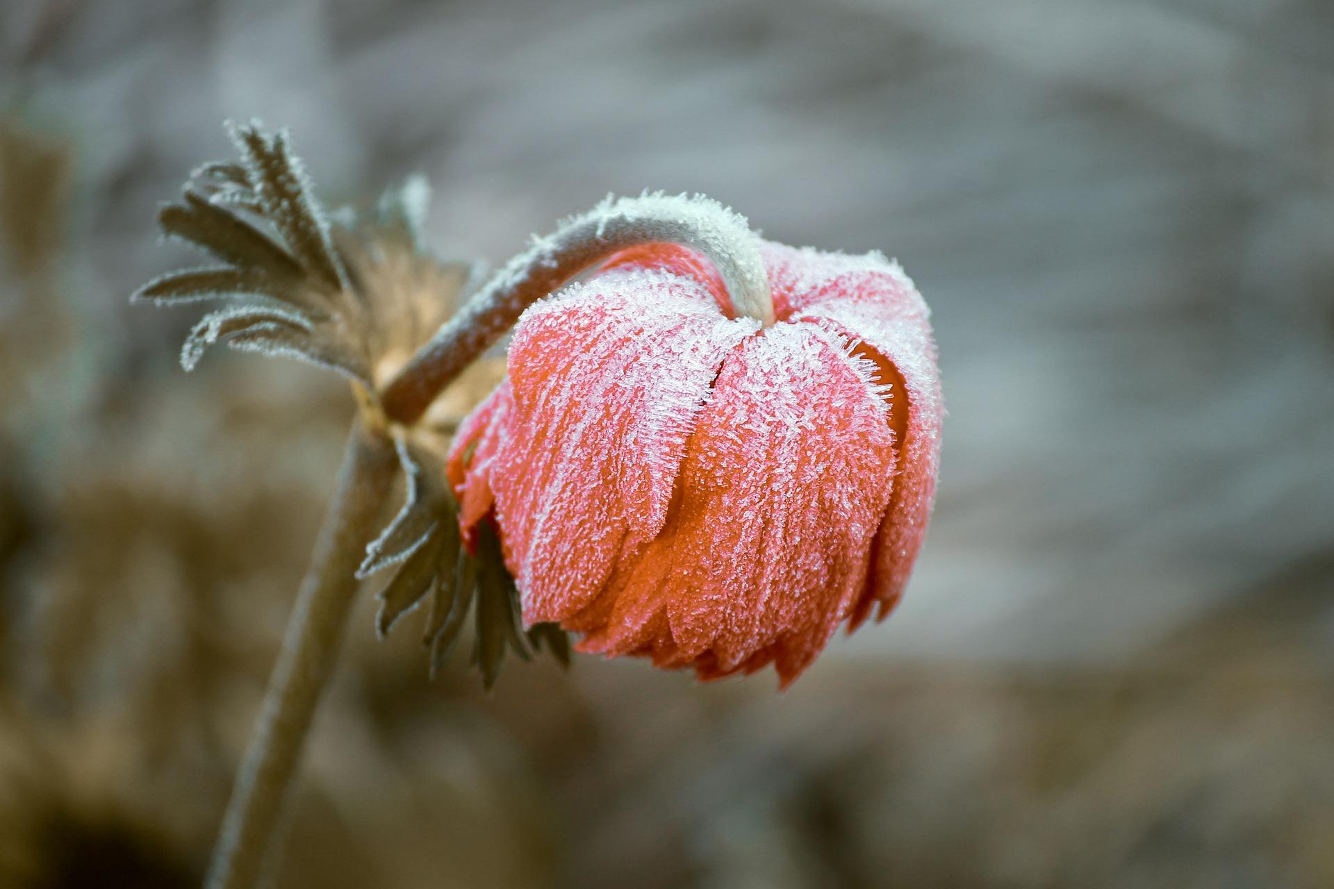 Miten luonnon ikiaikainen viisaus siirtyy kasvien kautta kehomme hyödynnettäväksi?